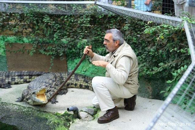 Укротитель крокодилов - Торремолинос, Андалусия, Испания. фото