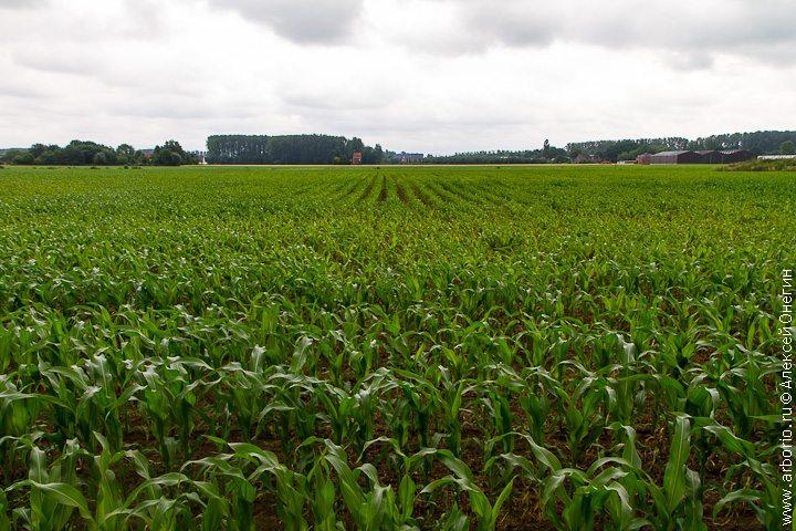 Пара слов о фермерских продуктах. Слово третье - фото