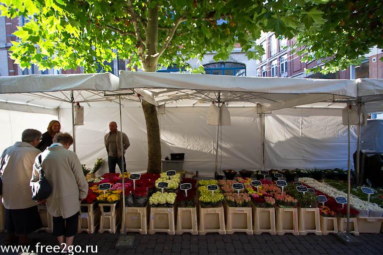 Размышления о просвещении - Лёвен, Бельгия. фото