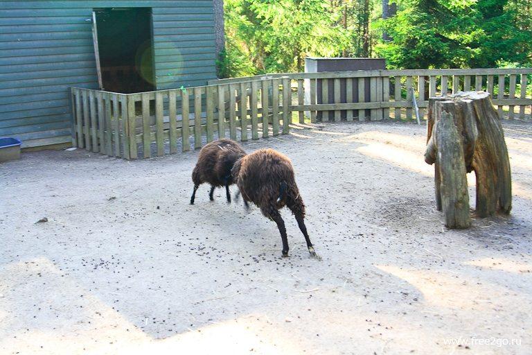 Схватка - Лес домашних животных, Йоутсено, Финляндия фото