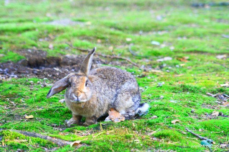 Кролики - Лес домашних животных, Йоутсено, Финляндия. фото