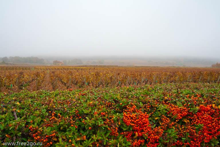 Франция с севера на юг. Виноградники Бургундии. Часть четвертая. фото