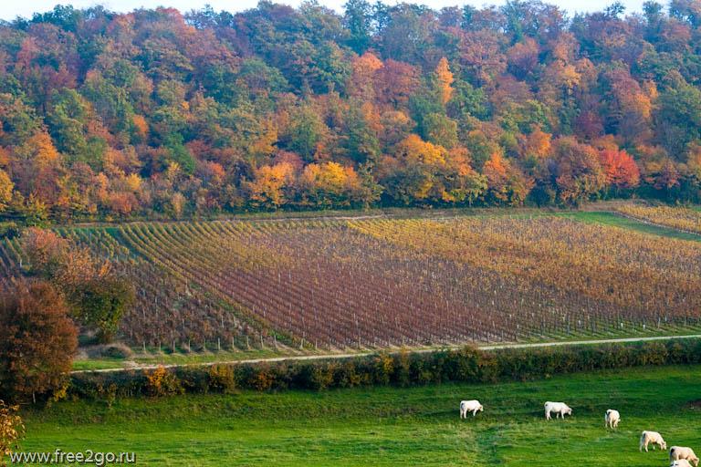 Франция с севера на юг. Виноградники Бургундии. Часть пятая. фото