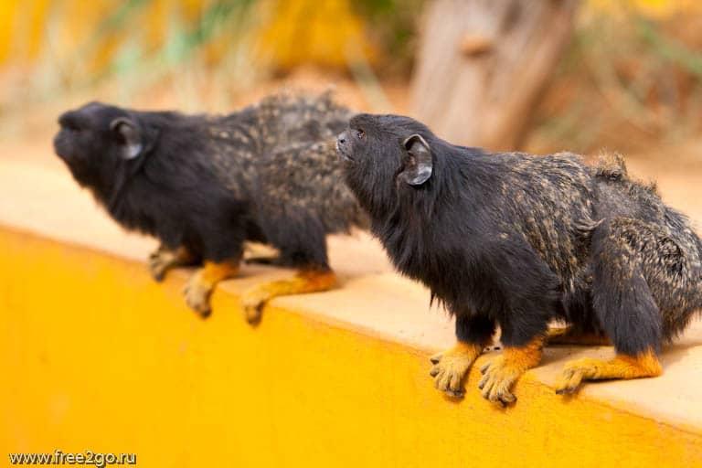 Живность за решеткой и на воле - Тенерифе, Канарские острова, Испания. фото