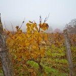 Франция с севера на юг. Виноградники Бургундии. Часть четвертая.