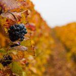 Франция с севера на юг. Виноградники Бургундии. Часть пятая.