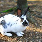Кролики — Лес домашних животных, Йоутсено, Финляндия.