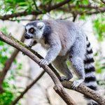 Обитатели зоопарка Валенсии