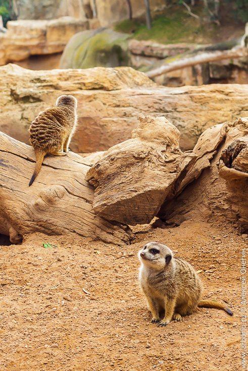 Обитатели зоопарка Валенсии фото