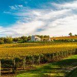 Вино и винодельни в Хорватии