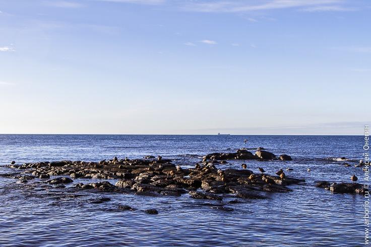 Гнездовье морских птиц, Исландия