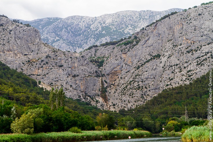 Река Цетина, Хорватия