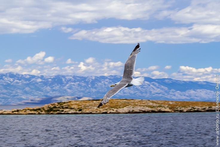 Морская прогулка вокруг острова Крк