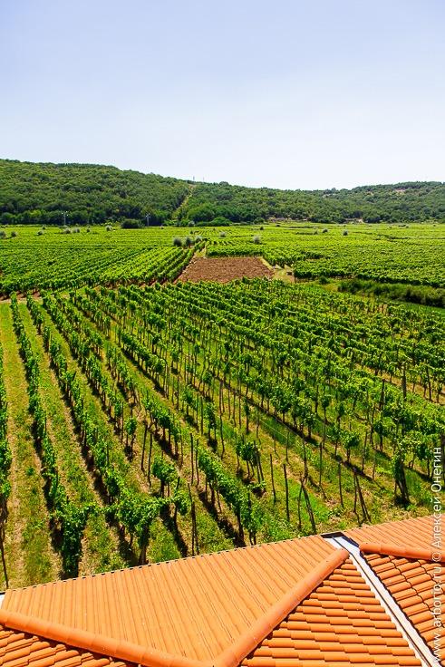 Винодельня Katunar, Врбник, Хорватия