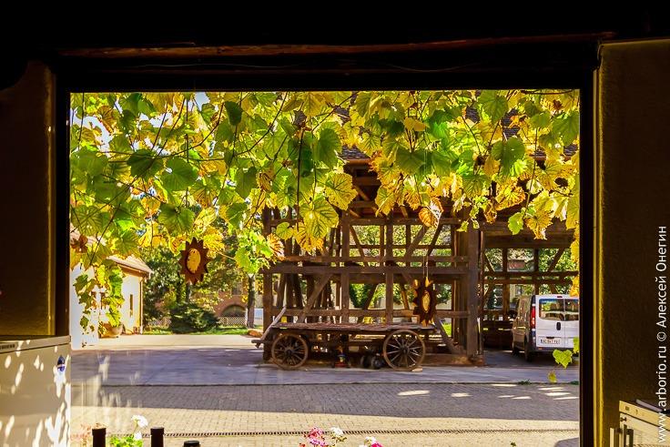 Виноделы-биодинамисты Эльзаса