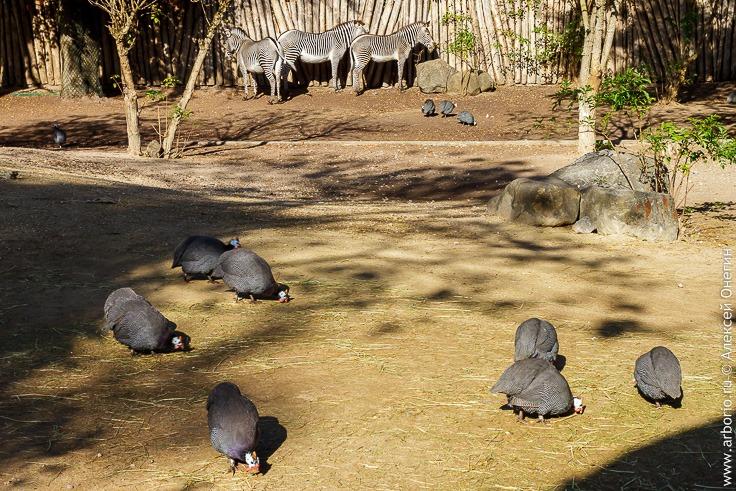 Зоопарк Мюлуза, Франция