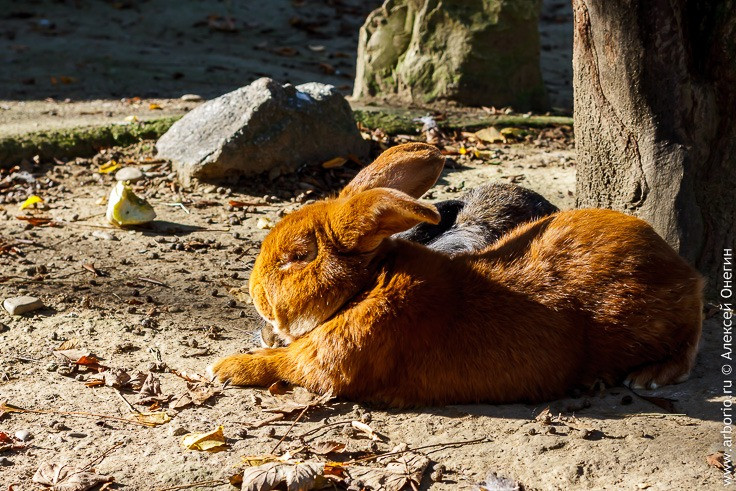 Зоопарк Мюлуза фото