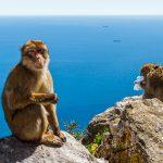 Гибралтар: то ли страна, то ли нет