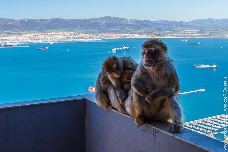 Гибралтар: то ли страна, то ли нет фото