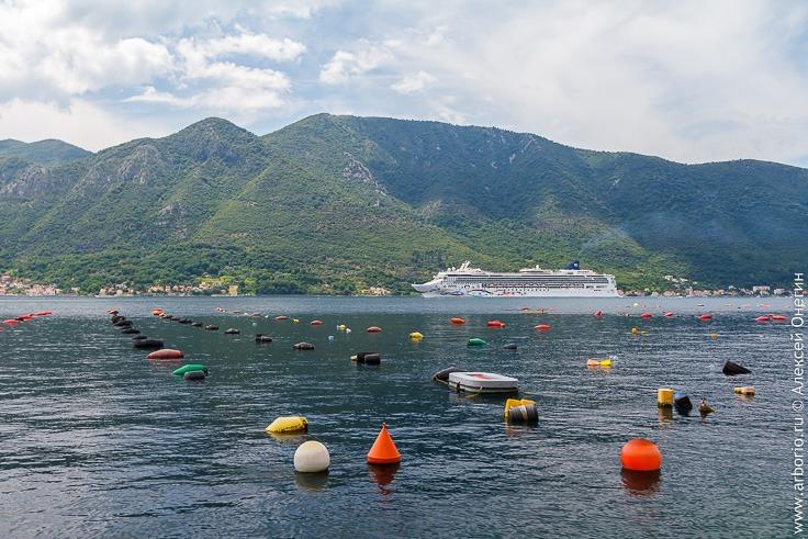 Хорватия или Черногория: какую страну выбрать для отпуска? фото