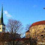 Таллин — виды и люди