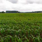 Пара слов о фермерских продуктах. Слово третье