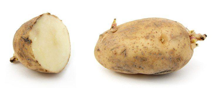 Зри в корень: путеводитель по корнеплодам - фото