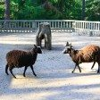 Схватка – Лес домашних животных, Йоутсено, Финляндия