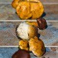 Что приготовить из грибов?..