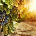 Российским винам – защищенное географическое наименование